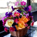 rose_petunia_pansy_flowers_composition_basket_hd-wallpaper-40231